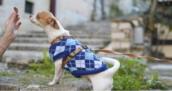Skanėstai šunims. Kam jie reikalingi?