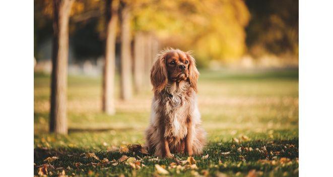 Šuns ekskrementai gatvėse – didesnis pavojus nei manote?