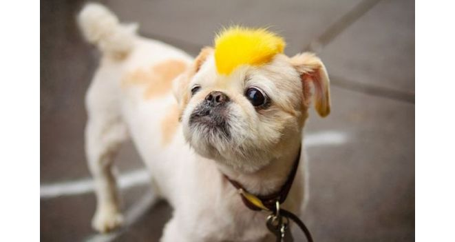 Šunų ir kačių šukuosenų mados