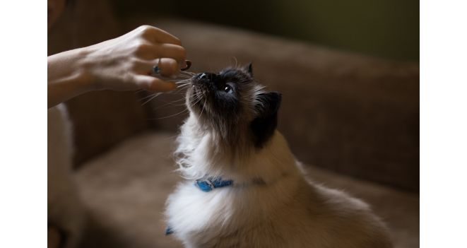 Gyvūnų pašaro technologai: augintiniai išrankesni klientai nei žmonės