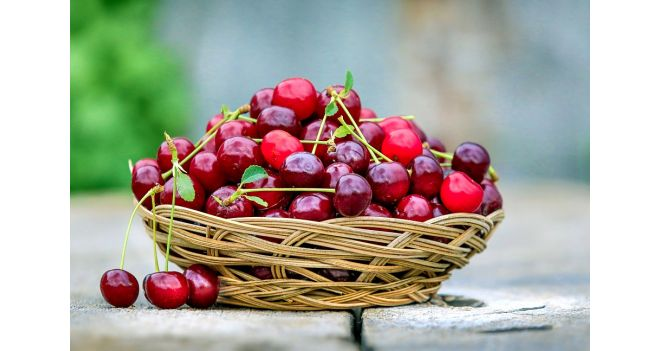 Ar galima šunims duoti vyšnių?