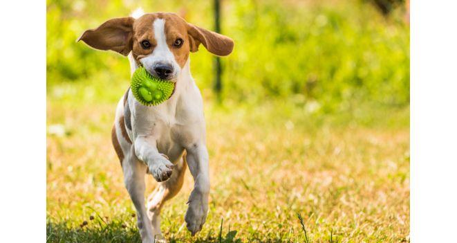 Loginiai žaidimai šunims