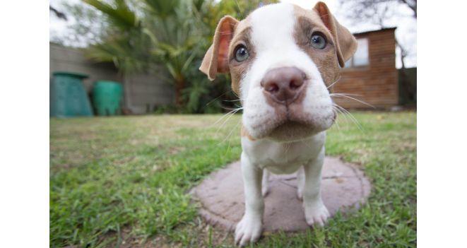 Šunidžių kosulys – kas tai ir kaip jo išvengti?