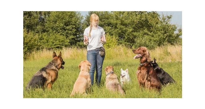Teisingas šuns auklėjimas ir dresūra