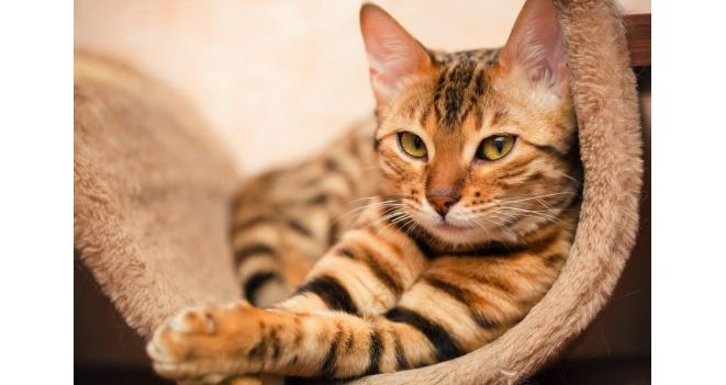 NATURE'S PROTECTION konservai – katėms gurmanėms!