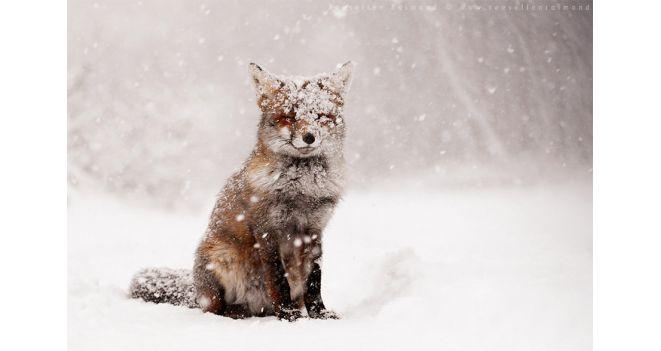 Žiema be rūpesčių!
