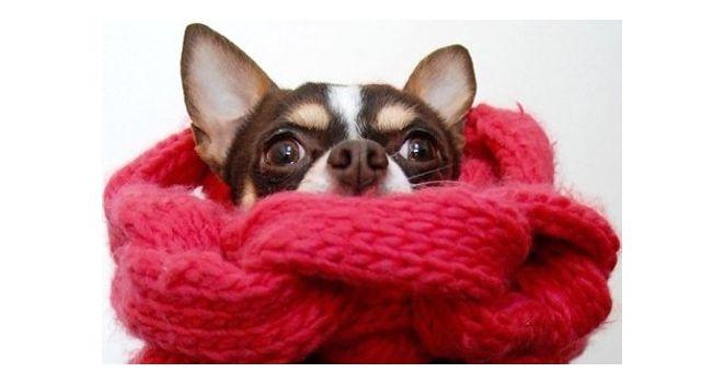 Žiema be rūpesčių: kaip pasirūpinti šunimi šaltuoju sezonu?
