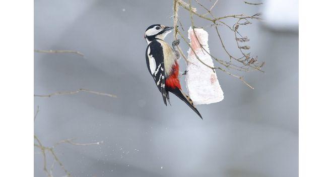 Laukinių paukščių priežiūra žiemą