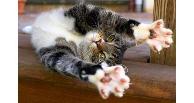 Aštriems katės nagučiams: draskyklė arba stovas
