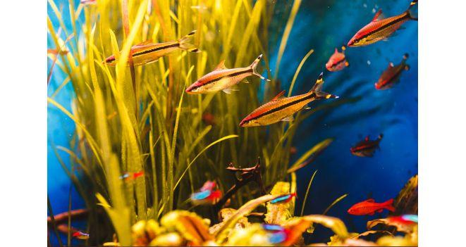 Akvariumo žuvelės – sielos ramybei
