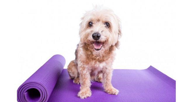Šunų joga, arba doga. Kas tai?