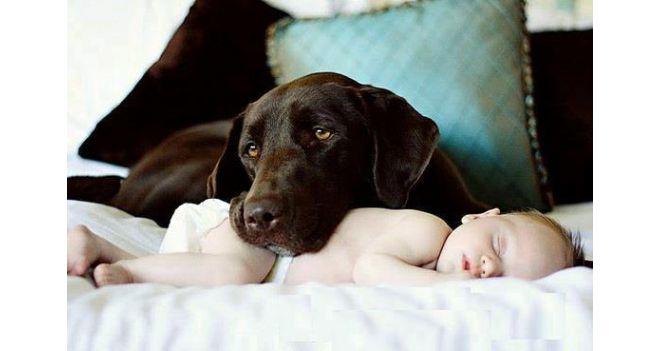 Vaikai ir šunys
