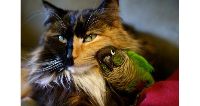 Katė ir paukštis – geriausi draugai!?