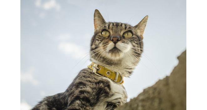 Kaip pripratinti katę prie pavadėlio?