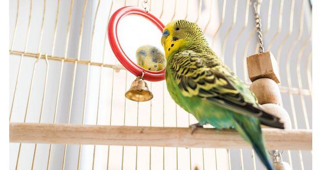 Paukščiuko būstas