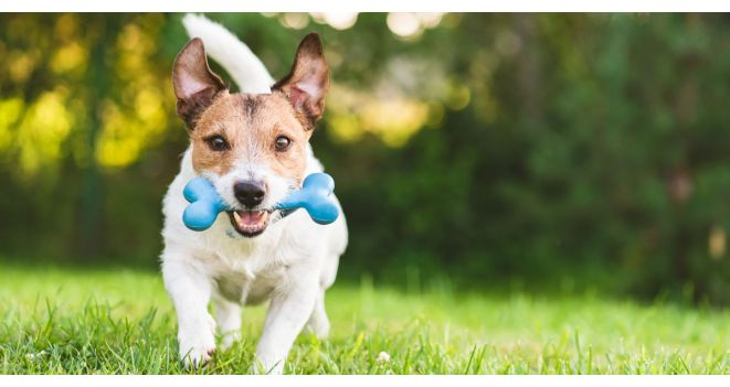 NAUJIENA – interaktyvus žaislas šunims PULLER