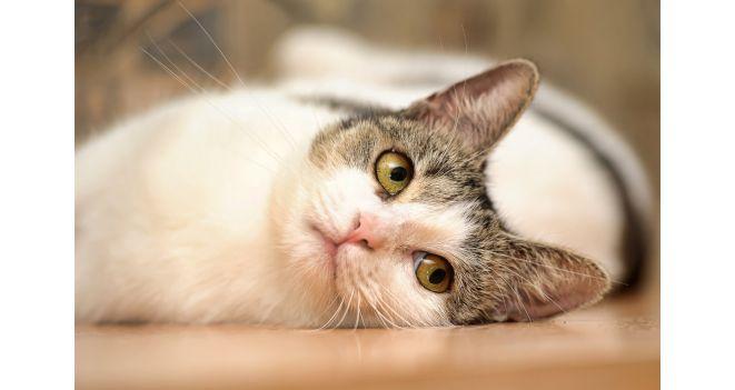 Kaip dresuoti katę?