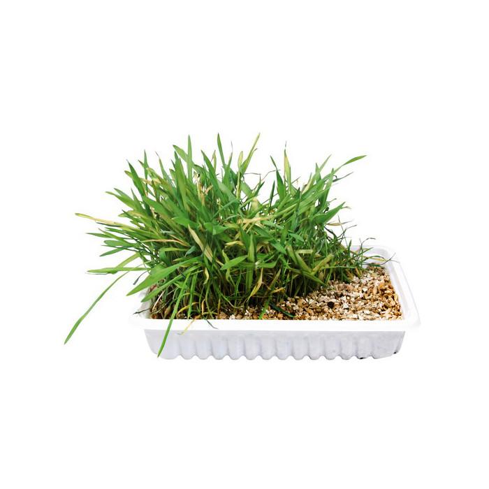 TRIXIE Natūrali žolė katėms