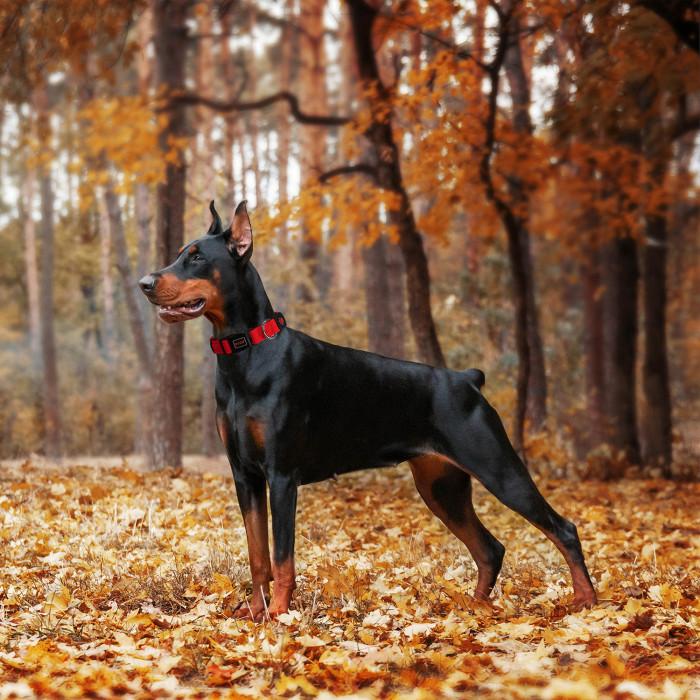 DOCO Puffy kvėpuojantis antkalis šunims