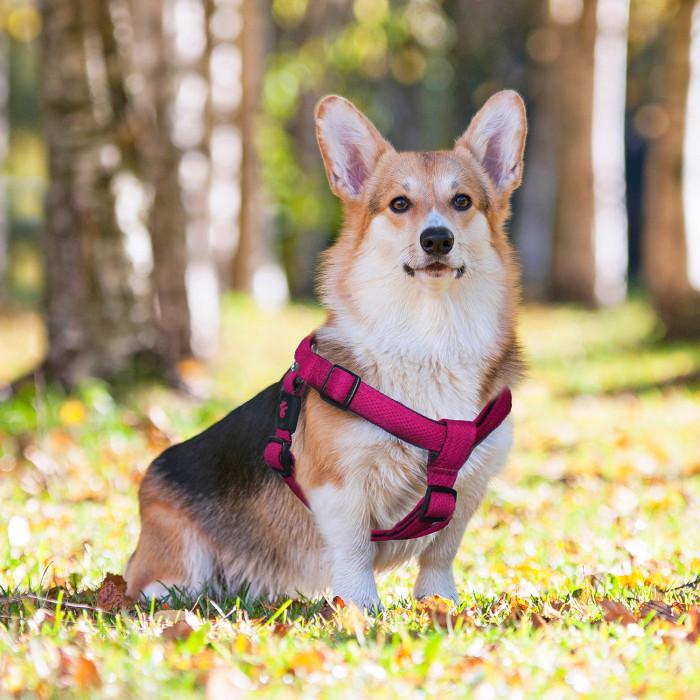 DOCO Puffy reguliuojamos petnešos šunims