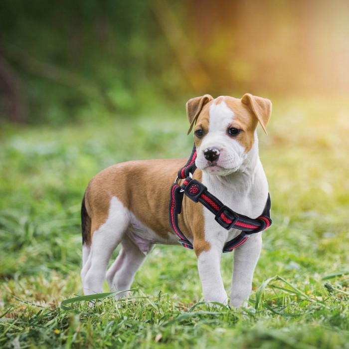 DOCO Athletica reguliuojamos petnešos šunims