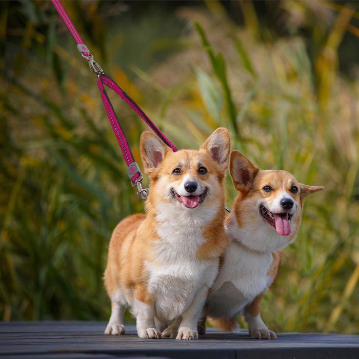 DOCO Vario jungtis pavadėliui šunims