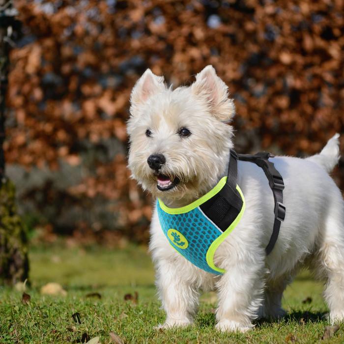 DOCO Super 3D reguliuojamos petnešos šunims