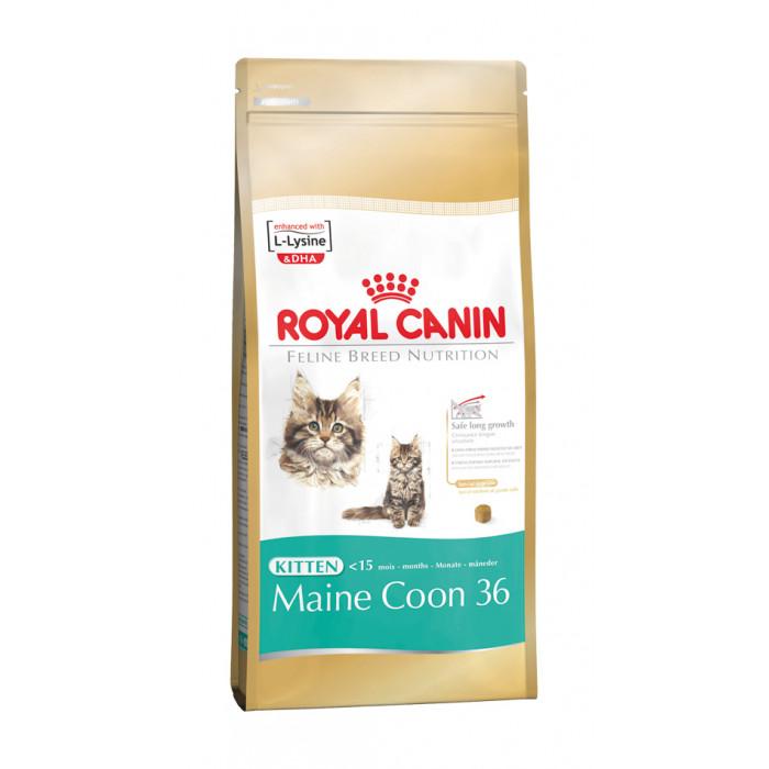 ROYAL CANIN Kitten Mainecoon Sausas pašaras katėms