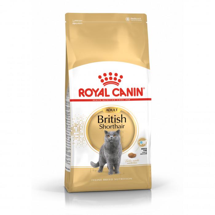 ROYAL CANIN British shorthair pašaras britų trumpaplaukėms katėms