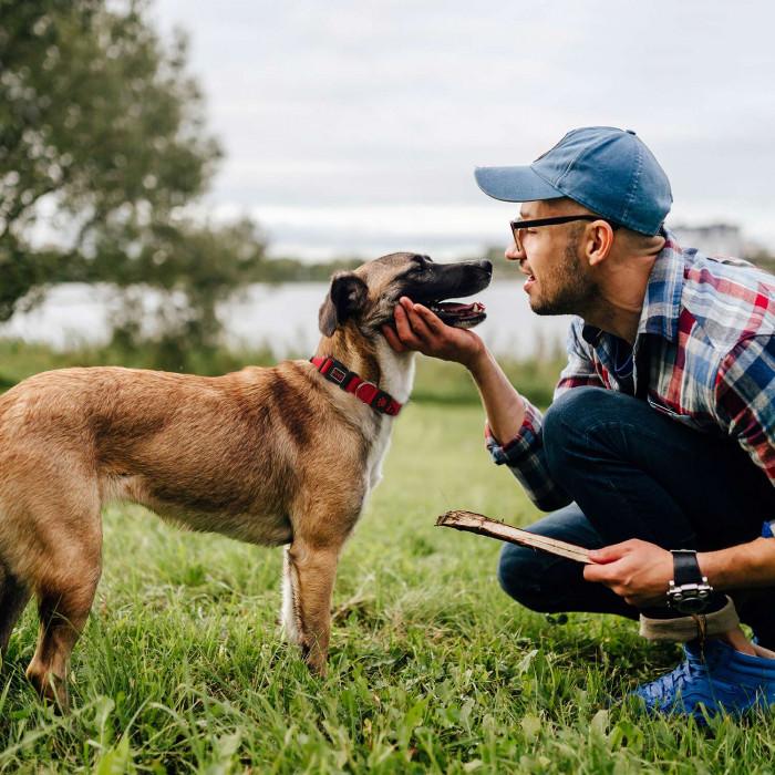 DOCO Signature antkaklis šuniui