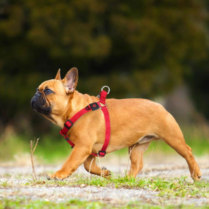 DOCO Signature petnešos šuniui