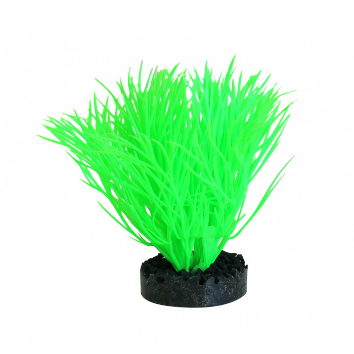 SYDEKO Akvariumų augalas Sunny Plant