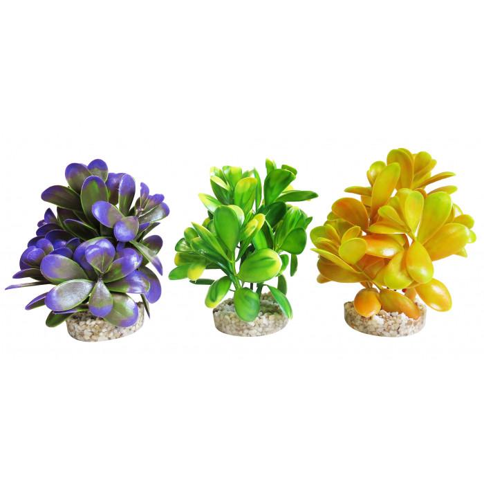 SYDEKO Akvariumų augalas Peeble plant,