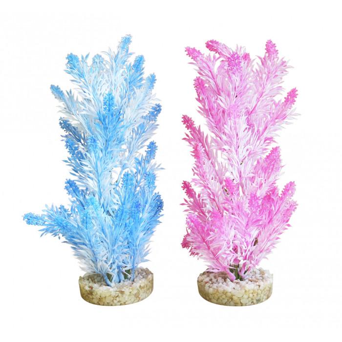 SYDEKO Akvariumų augalas Ice Colour Plant