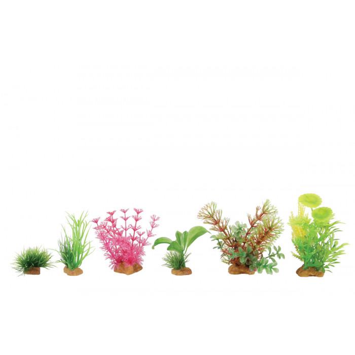 ZOLUX Akvariumų augalas Box Mixed Plants X6