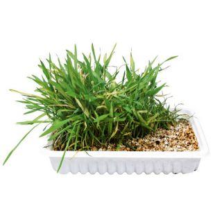 TRIXIE Natūrali žolė katėms 100 g