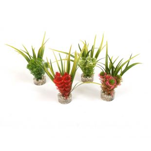 SYDEKO Nano Fiesta Flower Plastikinis augalas 12 cm
