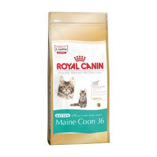 ROYAL CANIN Kitten Mainecoon Sausas pašaras katėms 400 g