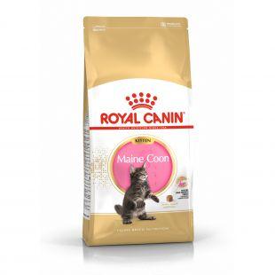 ROYAL CANIN Kitten Mainecoon Sausas pašaras katėms 10 kg