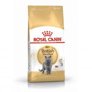 ROYAL CANIN British shorthair pašaras britų trumpaplaukėms katėms 10 kg
