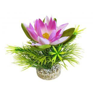 SYDEKO Akvariumų augalas Lotus Flower 18 cm