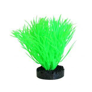 SYDEKO Akvariumų augalas Sunny Plant 11 cm