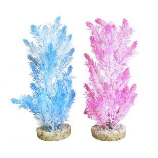 SYDEKO Akvariumų augalas Ice Colour Plant 28 cm