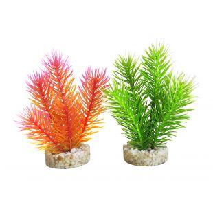 SYDEKO Akvariumų augalas Cabomba Pearl 14 cm