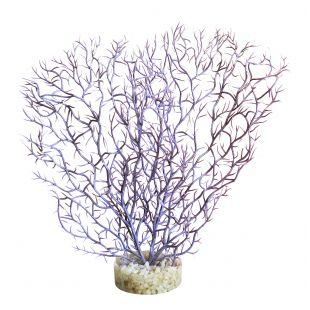 SYDEKO Akvariumų augalas Coral Hedge 21 cm