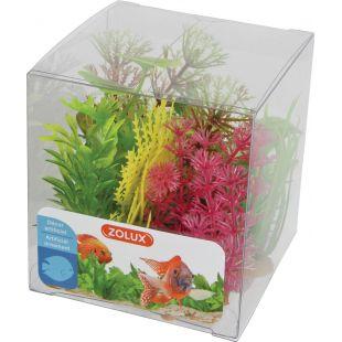 ZOLUX Akvariumų augalas Box Mixed Plants X6 9 cm