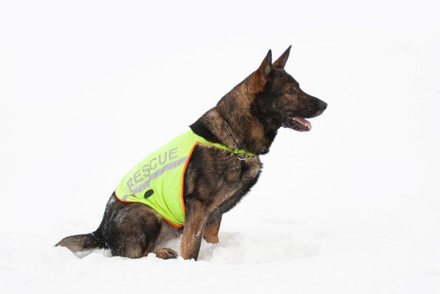 Ar mane matai? TOP patarimai, kaip užtikrinti šuns saugumą tamsiuoju paros metu