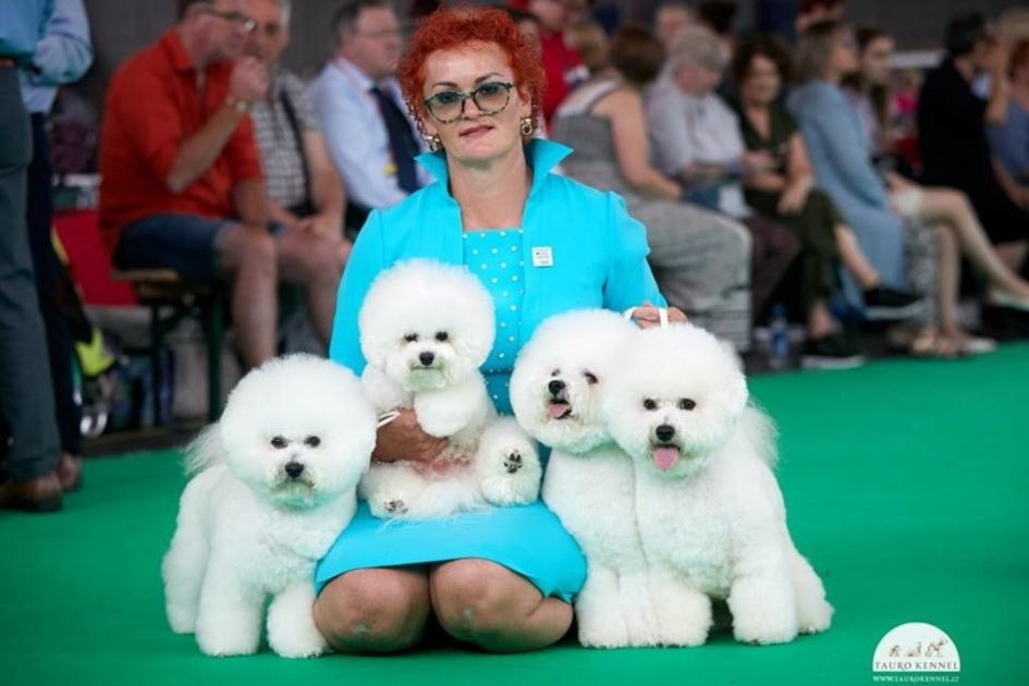 Didžiausioje šunų parodoje pasaulyje – lietuvių triumfas: gražuoliai bišonai skynė auksą