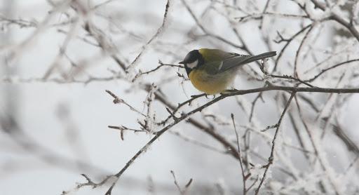 Kaip pasirūpinti laukiniais paukščiais žiemą?