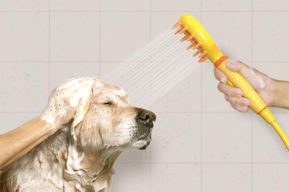 Kaip maudyti šunį?